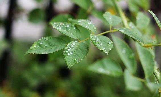 Green, Tree, Raindrop, Nature, Plant, Environment, Leaf