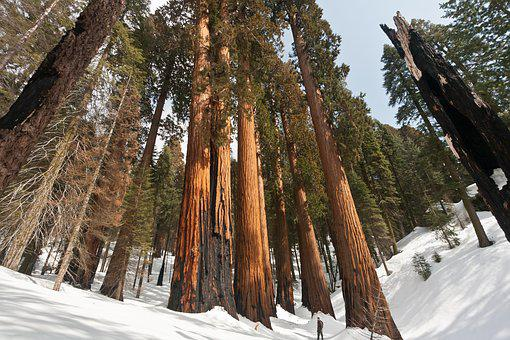 Usa, California, Sequoia National Park, Nature, Forest