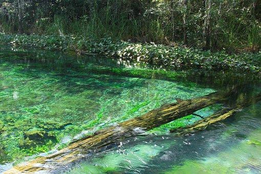 Spring, River, Current, Nature, Chiapas-mexico