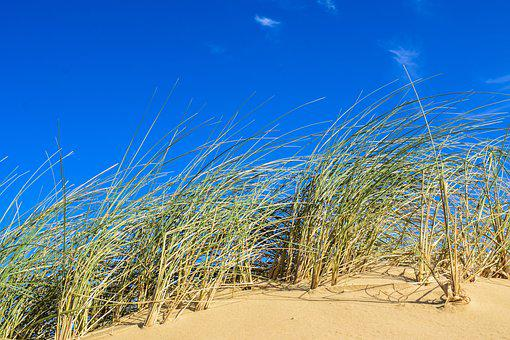 Sand Dune, Dune Grass, Coastal Landscape