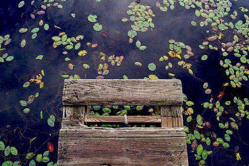 Dock, Water, Wooden, Plants, Lilies, Contrast, Color