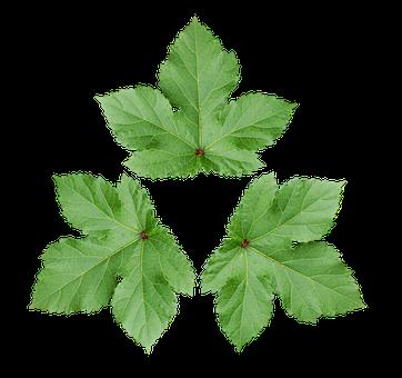 Large Leaf, Decoration Wallpaper, Green Leaf