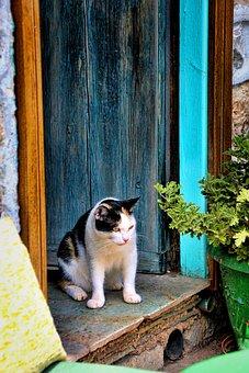 Cat, Door, Lauer, Home, Input, Old, Domestic Cat, Wood