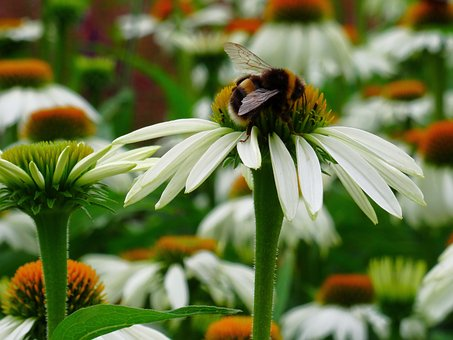 Bee, Pollination, Flower, Wing, Nature, Garden, Blossom