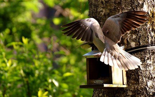 Pigeons, Bird, Food, Birds, Feather, Animal, Nature
