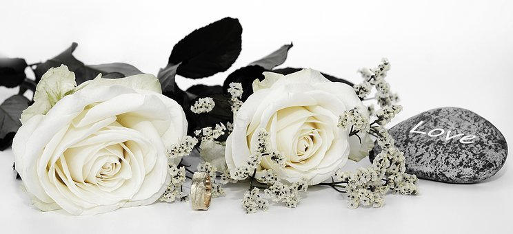 Roses, Rose Flower, Flowers, White, Gypsophila, Flower
