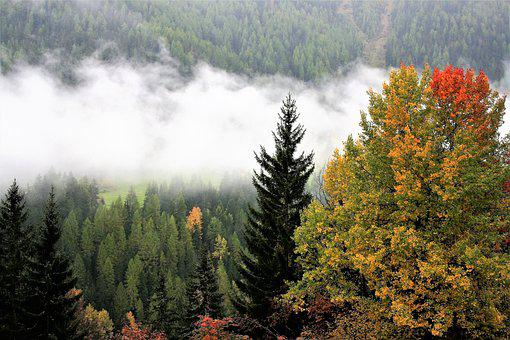 Fall Mountains, Colors, Tree, Haze, Forest, Autumn Gold