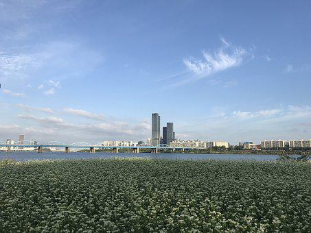 Korea, Seoul, Han River, In Autumn, Multiflora Flower