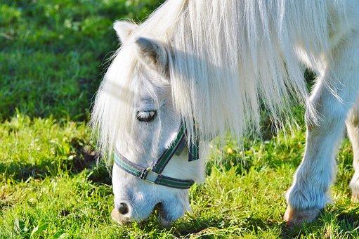 Horse, Pony, Seahorses, Mane, Animal, Cute, Small Horse