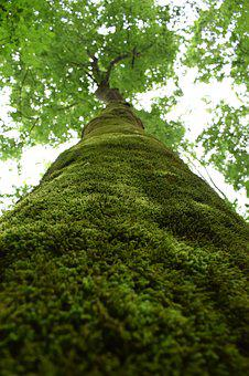 Tree, Moss, Forest, Green, Nature, Plant, Natural