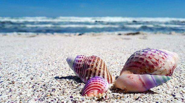 Seashell, Shell, Shells, Sea, Ocean, Beach, Nature