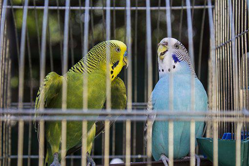 Animals, Parrots, Bird, Pet, Photo