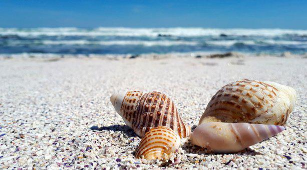 Shells, Shell, Sand, Sea, Nature, Beach, Seashell