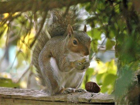 Squirrel, Nature, Animal, Forest, Wildlife, Wild
