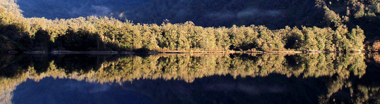 Water Reflection, Trees, Water, Quiet, Mirroring