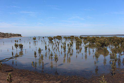 Mangroves, Western Port, Victoria, Australia, Ramsar
