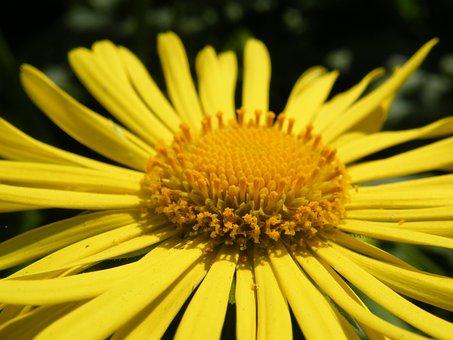 Flower, Yellow, Plant, Yellow Flower, Flowers, Nature