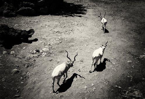 Kudu, Animals, Nature, Africa, Travel, Zoo, Horns