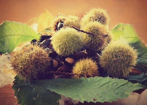 Autumn, Chestnuts, Autumn Colors