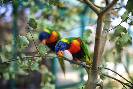 Parrots, Animals, Bird, Exotic, Nature, Cute, Tropical