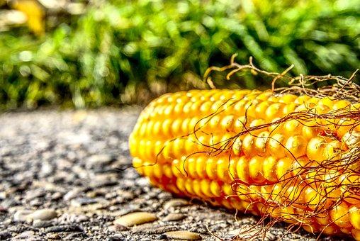 Corn, Corn On The Cob, Ground, On The Ground, Asphalt