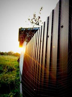 Fence, Spider Web, Ray, Dawn