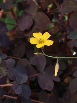 Small Flower, Flower, Nature, Flowers, Delicate Flower