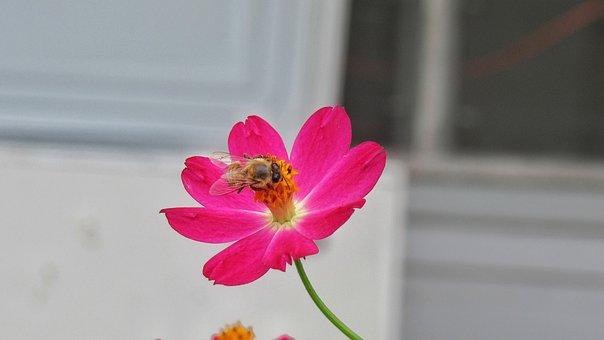 Nature, Flower, Bee, Summer, Flora, Petal, Pink, Decor