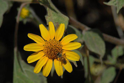 Bee, Flower, Plant