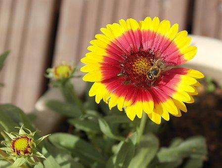 Bee, Forage, Nature