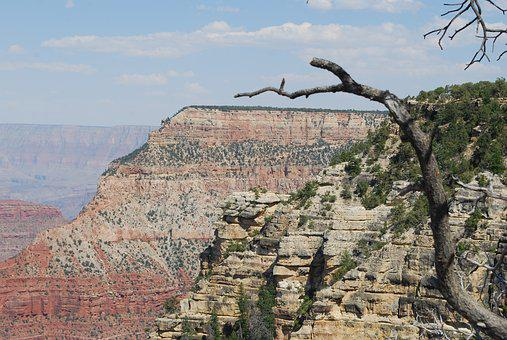 Grand Canyon, Branch, Landscape, Tree, Nature, Travel