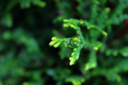 Leaf, Raindrop, Nature, Green, Plant, Drop, Water, Rain