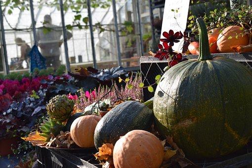 Autumn, Market, Pumpkin, Höstblommor, Late Summer