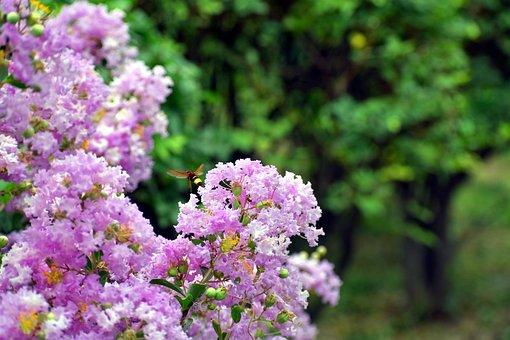 White Flowers, Bunch, Honey Bee