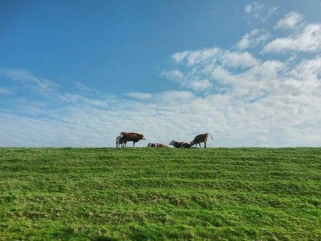 Cows, Dike, Group, Sky, Landscape, Rest, Idyll