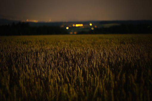 Lights, Field, Nature, Landscape, Outdoor, Agriculture