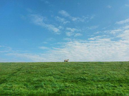 Sheep, Dike, Sky, North Sea, Deichschaf, Clouds, Meadow