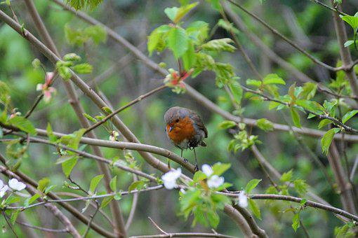 Bird, Tree, Outdoor, Nature, Natural, Branch, Season