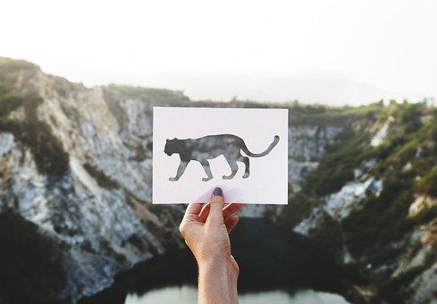 Freedom, Plants, Travel, Landscape, Stencil, Panthera
