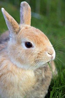 Rabbit, Dwarf Rabbit, Dwarf Bunny, Hare, Animal World