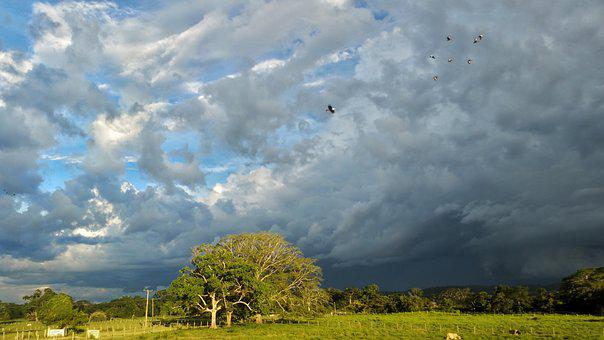 Pasture, Clouds, Cows, Rain, Birds, Ducks, Sky