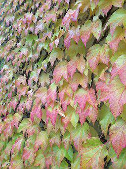 Autumn, Leaves, Golden Autumn, Mood, Leaf, Seasons, Red