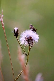 Thistle, Pre, Grass, Prairie, Nature, Field, Pasture