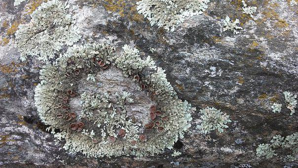 Whorls, Stone, Moss, Patterns, Grey, Green, Nature