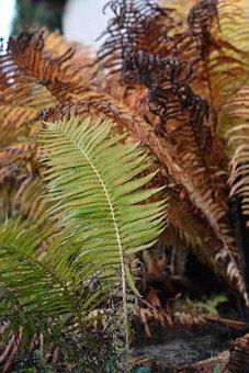 Autumn, Leaf, Fern, Fern Leaf, Ferns, Nature