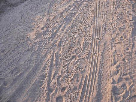 Traces, Sand, Beach, Auto, Turtle, Dog, Cat, Human