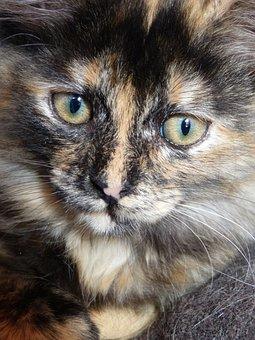Cat, Intense Look, Eyes, Domestic Animal