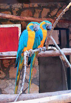 Parrots, Zoo, Bird, Nature, Wild, Tropical, Exotic