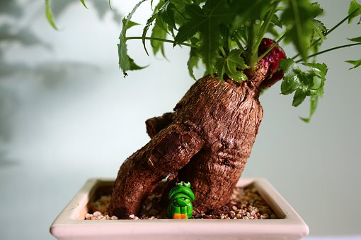 Bonsai, Frog, Buddha, Root, Green, Plant, Tree, Wood