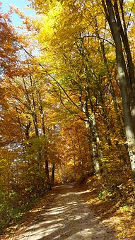 Autumn, Forest, Golden Autumn, Autumn Sun
